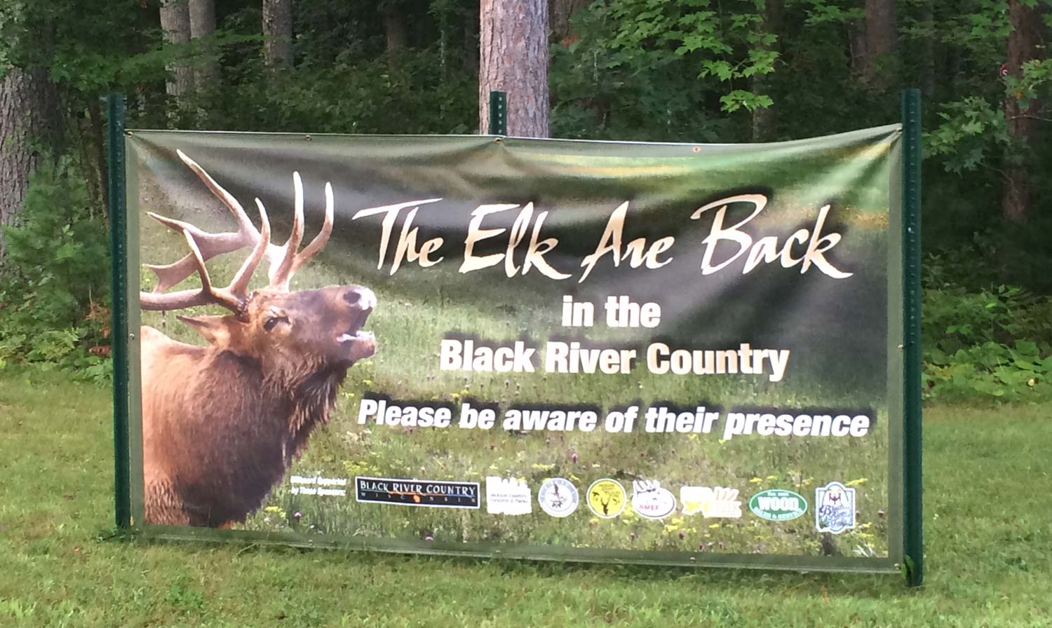 The Elk are back