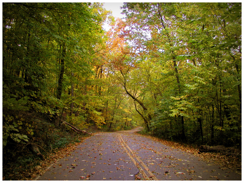 Fall leaf colors just starting to show at Radnor Lake. Hints of yellow and orange leaves.